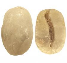 Peru Cepro Yanesha